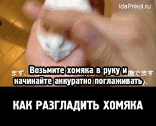 Как разгладить хомяка / АйДаПрикол :)