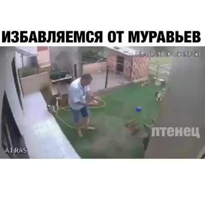 idaprikol.ru