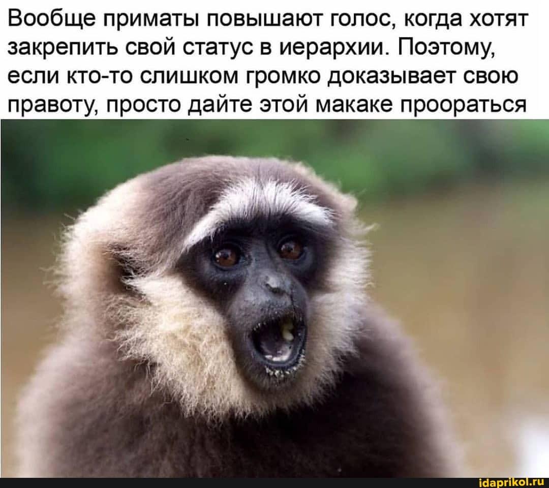 Вообще приматы повышают голос, когда хотят закрепить свой статус в иерархии. Поэтому, если кто-то слишком громко доказывает свою правоту, просто дайте этой макаке проораться