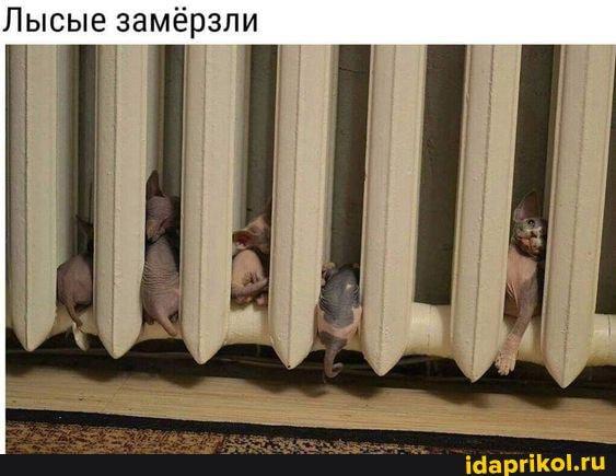 https://cdn.idaprikol.ru/images/bb443d3d58ecd2646094062d66b4972b4657edf9c96e4a8aeb023050cd6c9e4b_1.jpg