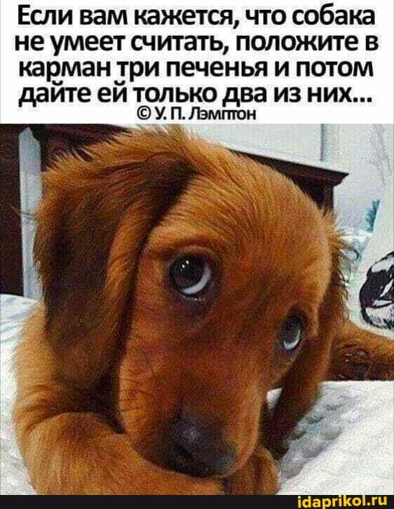 Если вам кажется, что собака не умеет считать, положите в карман три печенья и потом дайте ей только два из них...